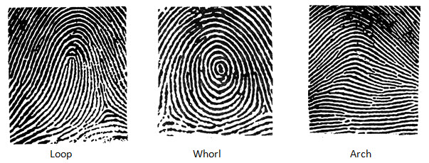 fingerprints 1